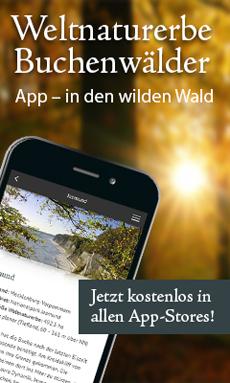 """Vier Bundesl�nder pr�sentieren  vier Bundesl�nder launchen """"Weltnaturerbe Buchenw�lder""""-App Bild"""