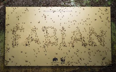 Ameisen des K�lner Zoos schreiben 500 Dankeskarten an WWF-Spender Bild